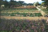 Hope Gardens Jamaica