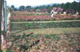 Hope Garden Jamaica