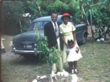 Jamaica The Barrots