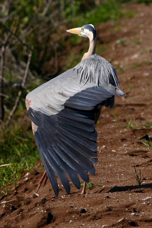 GBH Stretching