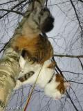 puussa1.jpg