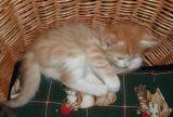 Arietta resting in the basket!