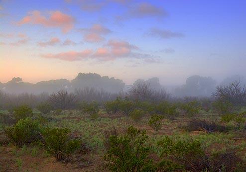 Dawn Mist 6650