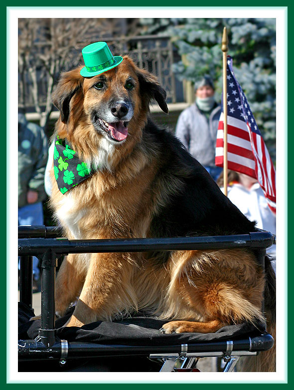 Dog of the Irish