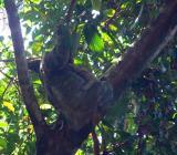Additional wildlife of Costa Rica