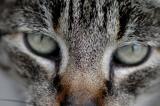 Cat B.T