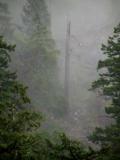 Foggy Day.jpg