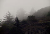Foggy hillside 2.jpg
