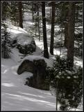 3-05oldgrowthrocks.jpg