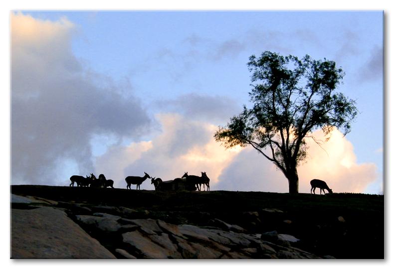 Grazing the pastures of heaven