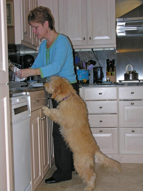 Kona is a great help in the kitchen