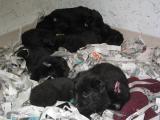 Diva has Puppies - November 15th, 2004