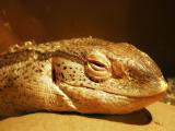 lizardsmile.jpg