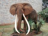 Kenyan National Museum