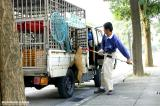 ¡i¥þ¥Á¤½¼Ä¡÷®·¤ü¶¤ / ¤ü¼Ü ..... Save Taiwan Stray Dogs¡j
