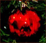 my  Christmas reflection