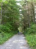 forest-trail.jpg