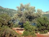 82 on Lycian Way, Turkcell sponsored prayer tree