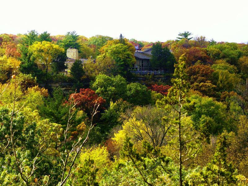 Looking Across Treetops to Lodge.jpg