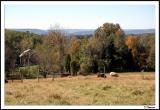 10/19/04 - Maryland Farm
