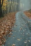 10/20/04 - Misty/Rainy Fall Colors