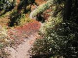 Trail ZigZaging amid Fall Colors