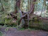Hugging Trees Again