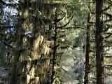 Vertical Trees
