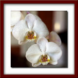 My first orchid