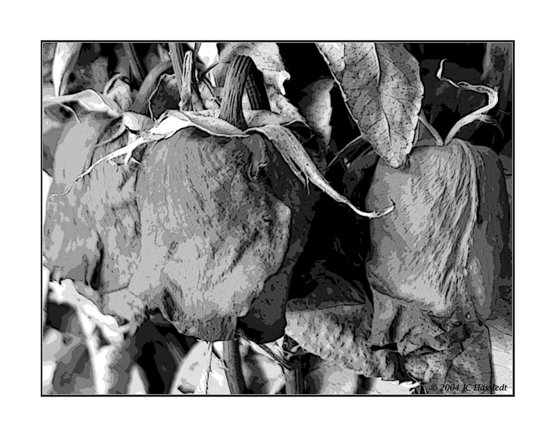 Expired with Poster Edges filter in B&W