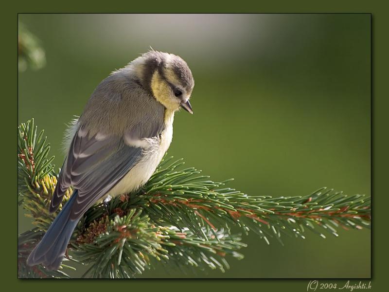 Birds of Zarnovica/Slovakia
