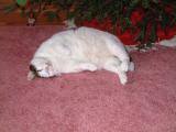 Too Much Christmas Turkey !!!  ( URP! )
