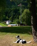 Joop's Dog Log - Tuesday August 17