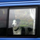 Joop's Dog Log - Wednesday August 18