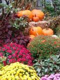 NYU Medical Center Fall Garden