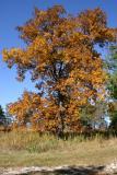 Morton Arboretum / Illinois