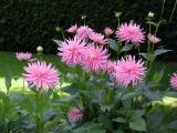 Flowers, British Columbia