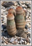 Cactus - CRW_1329 copy.jpg