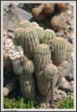 Cactus - CRW_1330 copy.jpg