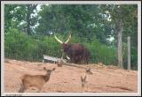 Horns - CRW_1422 copy.jpg