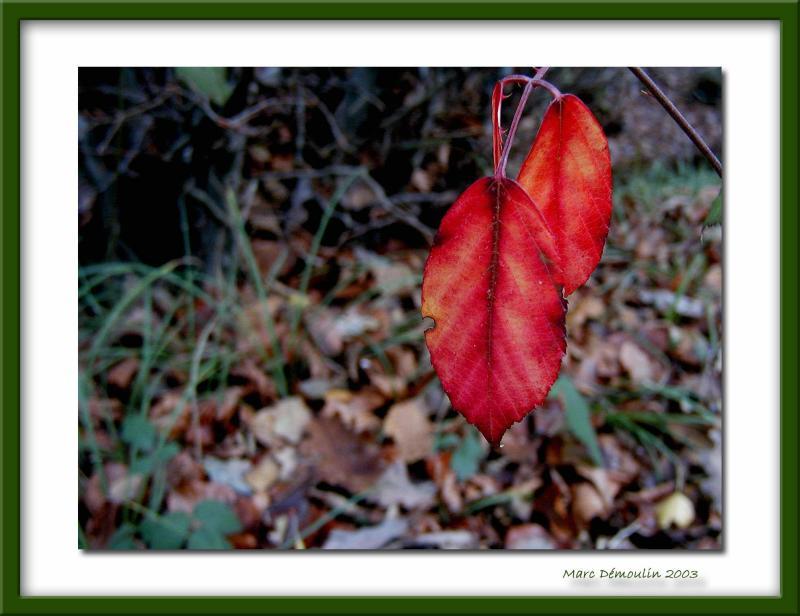 Fall, Ferrières