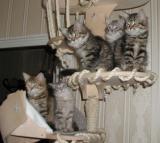 Five kittens posing.