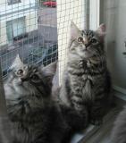 Hilda and Hulda - brown mackerel girls