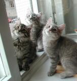 Hilda, Viki, Blue