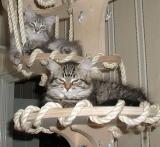 Viki and Hulda enjyoing the cat tree