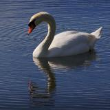 Lake Wire Swan 2100