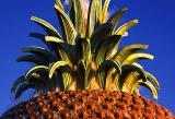 Waterfront Park Pineapple Fountain Closeup