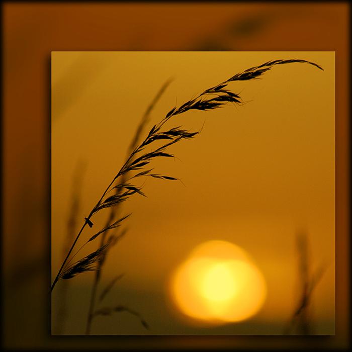 Grassy sunset, Ham Hill, Somerset (5000)