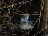 Sparrow in hiding.jpg(379)