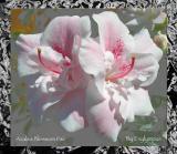 Azalea Blossom Pair by:Exylympus
